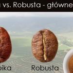 Gatunki kawy Arabika i Robusta – charakterystyka i główne różnice