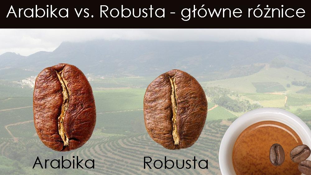 Gatunki kawy arabika i robusta główne różnice