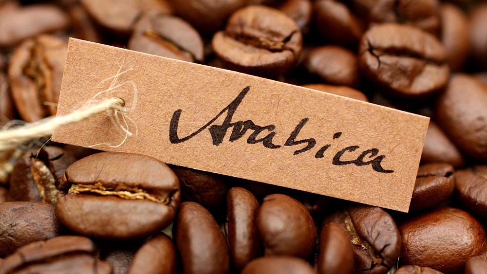 Gatunek kawy arabika