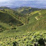 Plantacje kawy na świecie